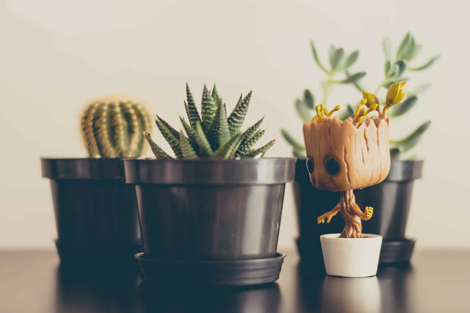 potted plants and a baby Groot figurine on a table