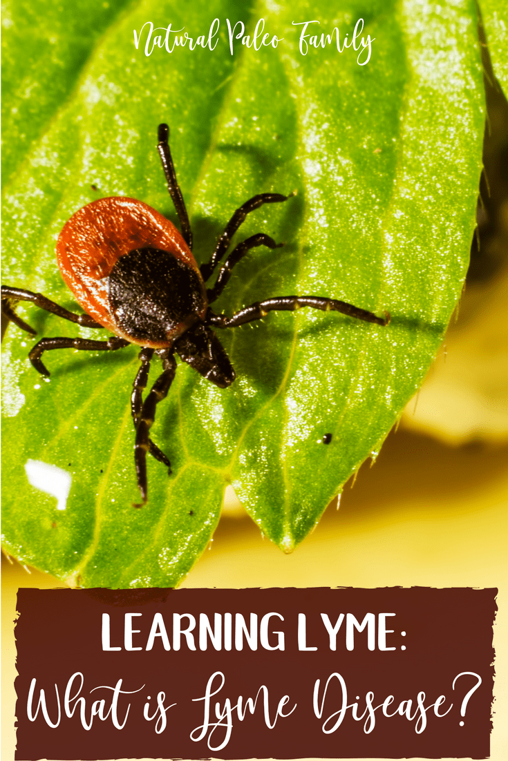 Lyme disease is not easy to understand.  It's complex, highly adaptable, and difficult to diagnose.  Learn about treatments for Lyme disease today!