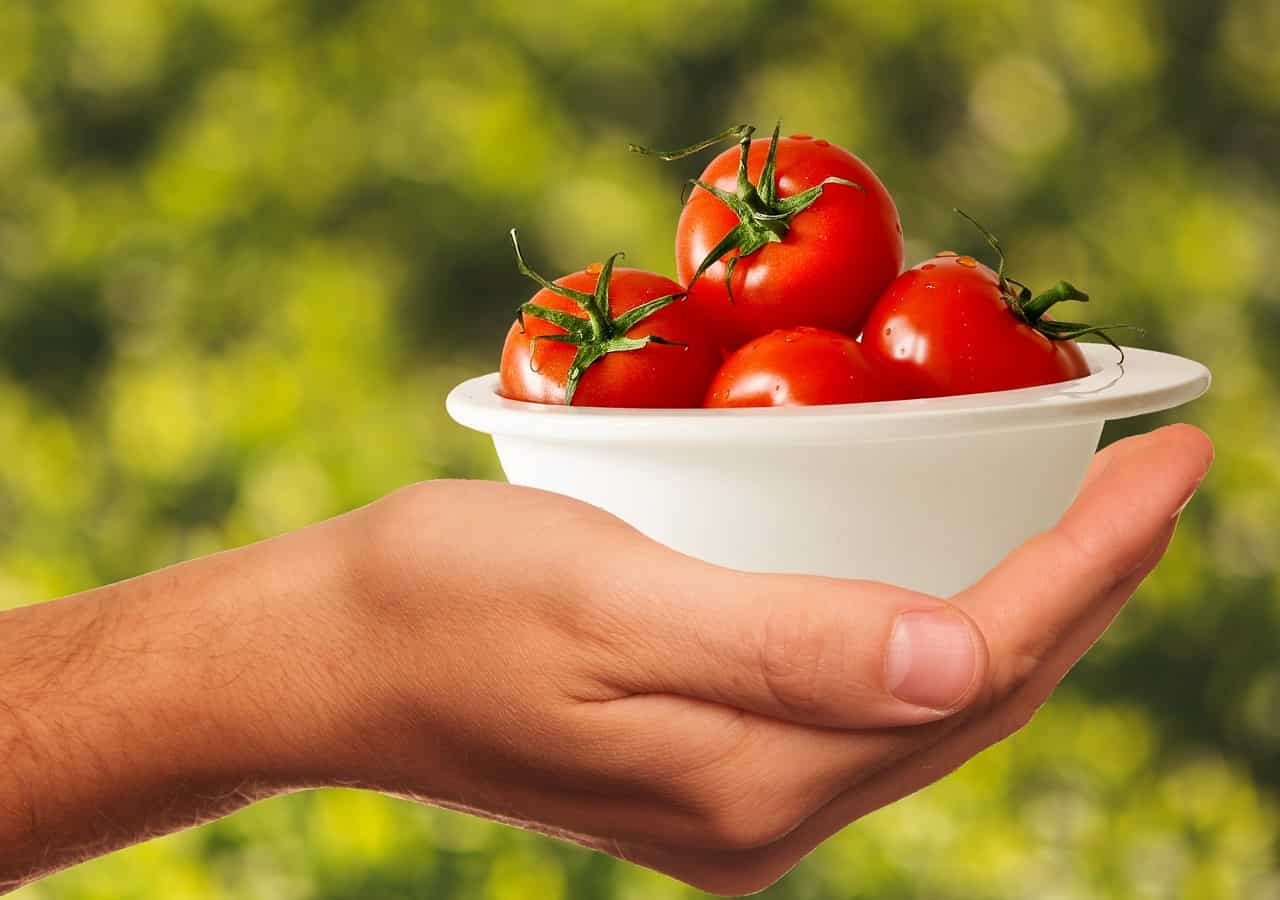 a hand holding a small bowl of tomatoes