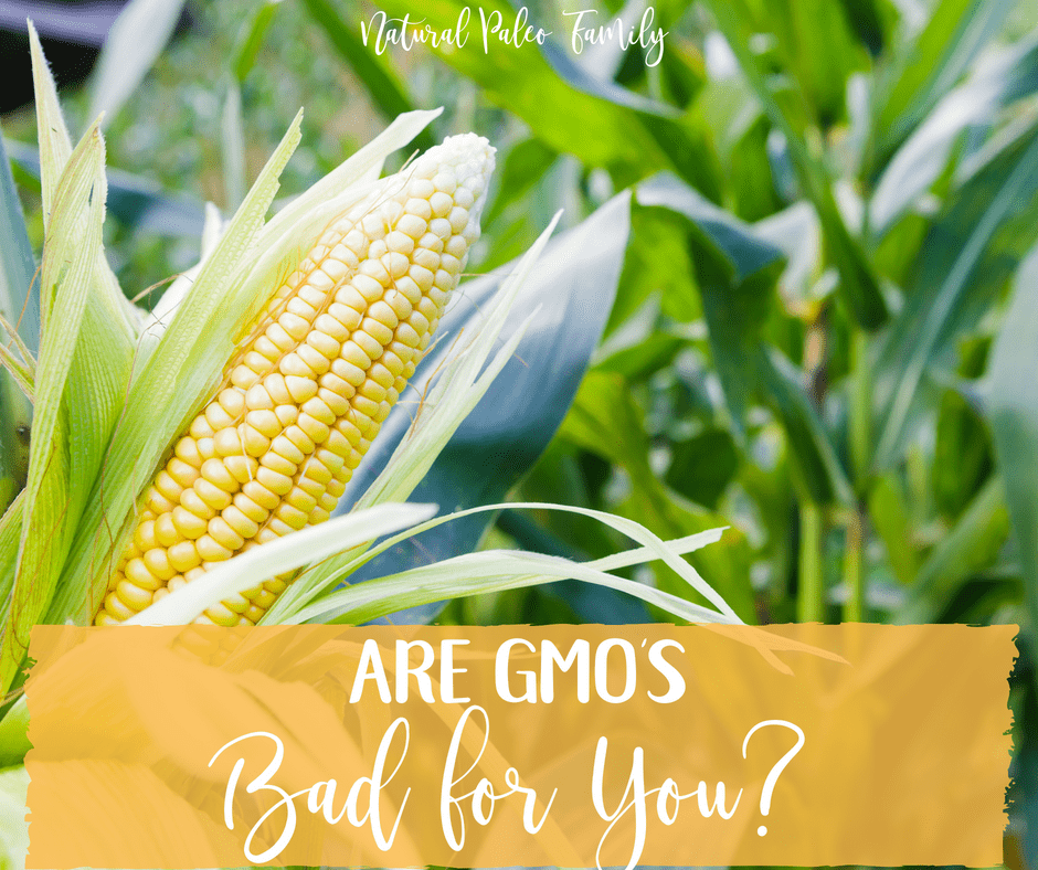 In recent years, GMO's, have become a major part of life in the United States. So, are they safe, or are GMO's bad for you?